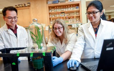 NC State Team Wins BASF Plant Science Competition