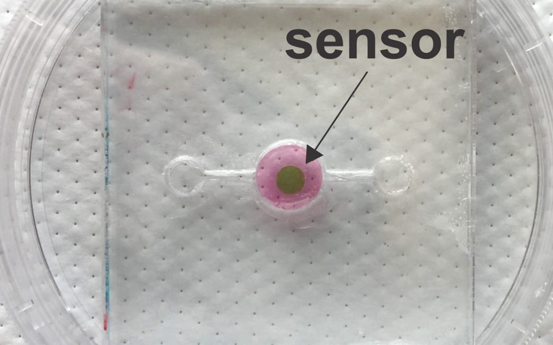 Biosensor Allows Real-Time Oxygen Monitoring for 'Organs-On-A-Chip'