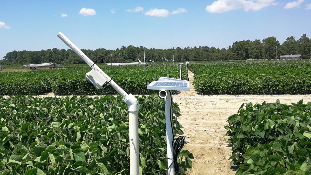 A StressCam, a low-cost camera system to monitor crop stress, over a field of soybeans at the Sandhills Research Station.
